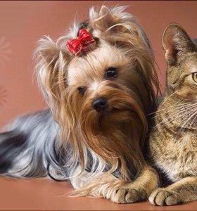 Парихмахерская для собак и кошек.