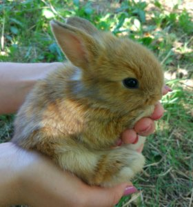 Декоративные кролики 🐰