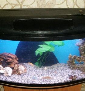 Панорамный аквариум с тумбой