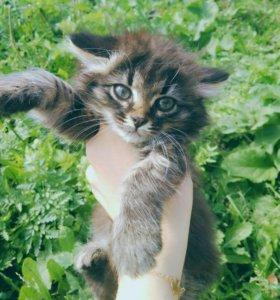 Котята в добрые руки ))