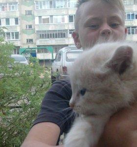 Котята на в добрые руки