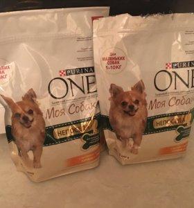 Корм для маленьких собак