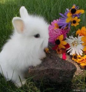 Крольчата карликовые