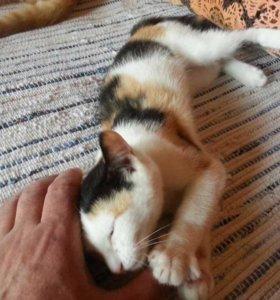 Кошечка Девочка, 6 месяцев
