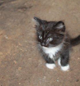 Отдам в добрые руки котика и кошечку