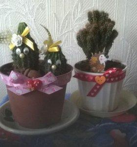 Декорированные кактусы
