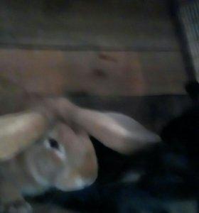 Кролики от 150 рублей
