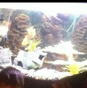Угловой аквариум 250 литров, цена снижена!!!!