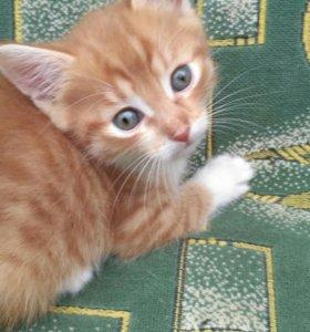 Котята !!! Отдам в добрые руки!!!!!