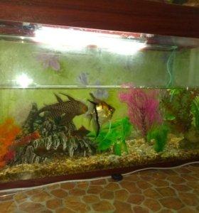 Срочно продам аквариум 120л с рыбками