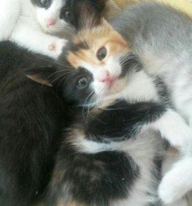 Котейки в добрые руки