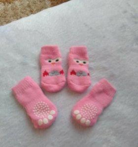 Носочки для маленькой собачки