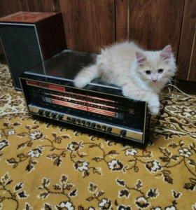 Радиоприемник, проигрыватель виниловых дисков, кол