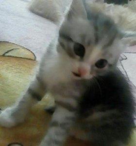 Отдам котят даром)