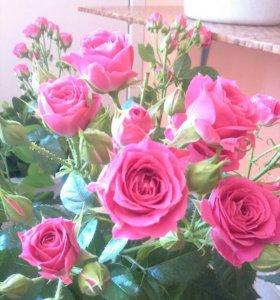 """Магазин """"Цветы!!!"""""""