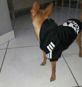 Одежда для животных!