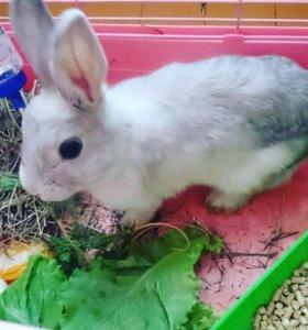 Кролик + большая клетка