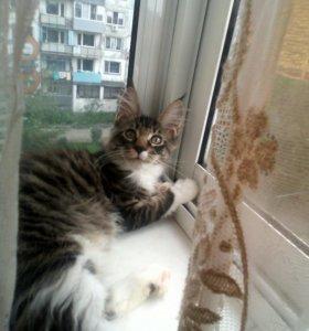 Рысятки котятки