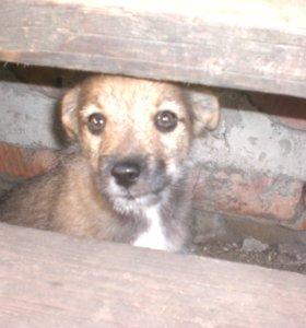 щенок маленький и игривый