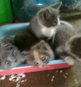 Отдам очень игривых котят в добрые руки))
