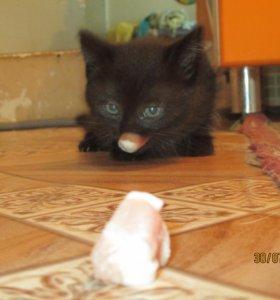 котята 2 месяца кот и кошечка