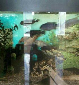 Аквариум с рыбками 150 литров