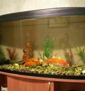 Продается аквариум с рыбками