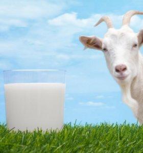 козье молоко и творог