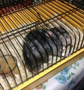 Крыса клетка поилка
