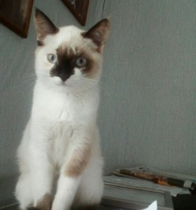 Кошечки красавицы