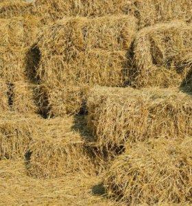 Продается сено тюкованное