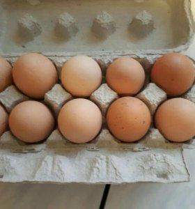Куриные яйца ,перепелиные.ДОМАШНИЕ!!!