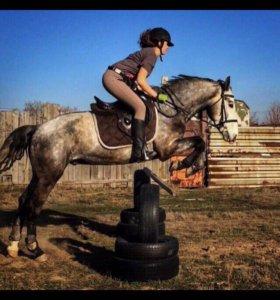 Уроки верховой езде и фотосессии
