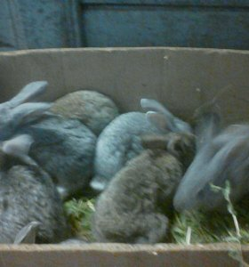 Кролики 2 месяца