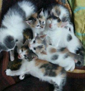 Котятки ищут любящий дом.