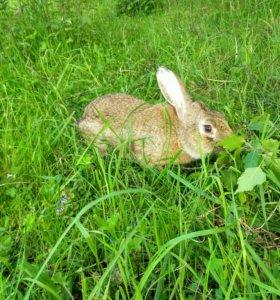 Продам крольчиху !!!