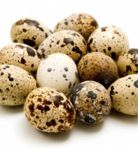 Домашние перепелиные яйца