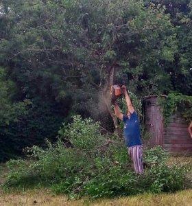 Спил деревьев. Уборка территории. Покос травы.