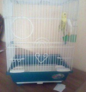 Волнистый попугай с клеткой!
