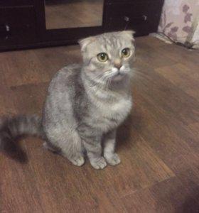 Мраморная Вислоухая Кошка