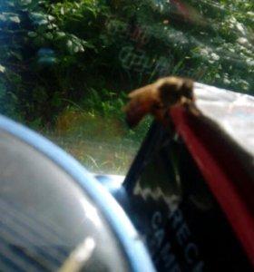 Пчелинная матка