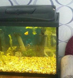 Продам аквариумы возможно штучно