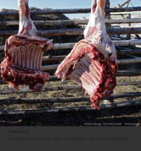 Домашняя говядина частями
