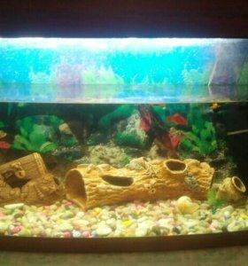 Аквариум с рыбками и сомики
