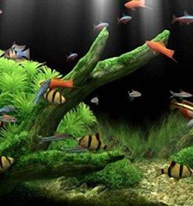 Рыбки и растения для маленького аквариума