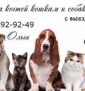 Стрижка когтей кошкам и собакам