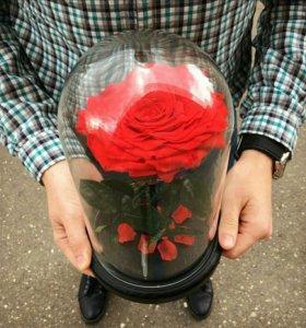 Роза в колбе с гравировкой
