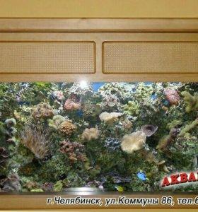 Установка и обслуживание любых аквариумов