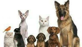 Выгул домашних животных