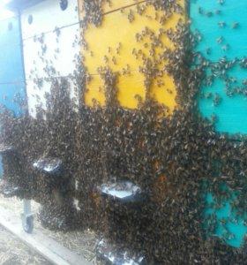 Мёд цветочный, подсолнечный